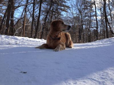 Dog Training Toronto Ontario