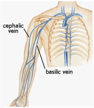 approach to difficult vascular access, Cephalic Vein
